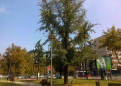 Ginko – Beograd