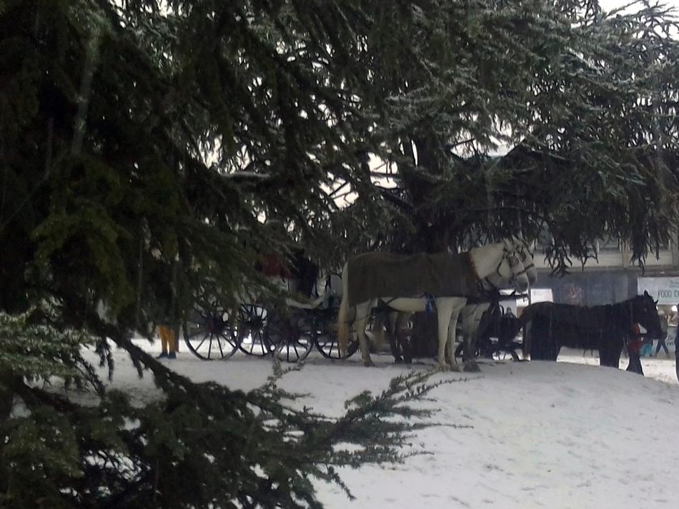 Prva izložba konja u Beogradu