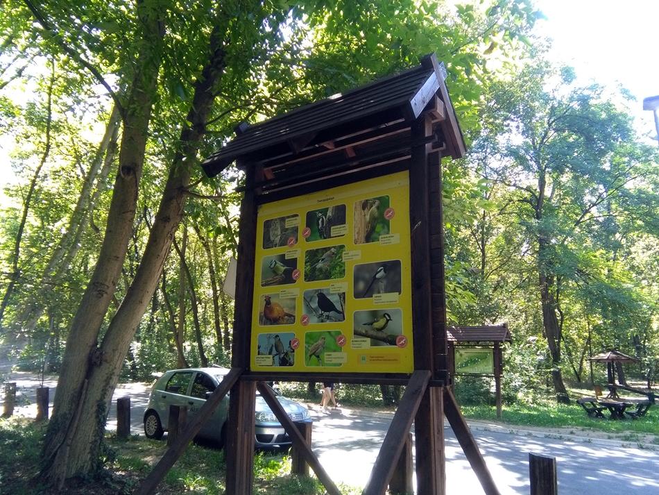 Bajfordova šuma u Beogradu ( Banjička šuma )