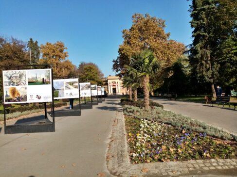 Palm trees in Belgrade