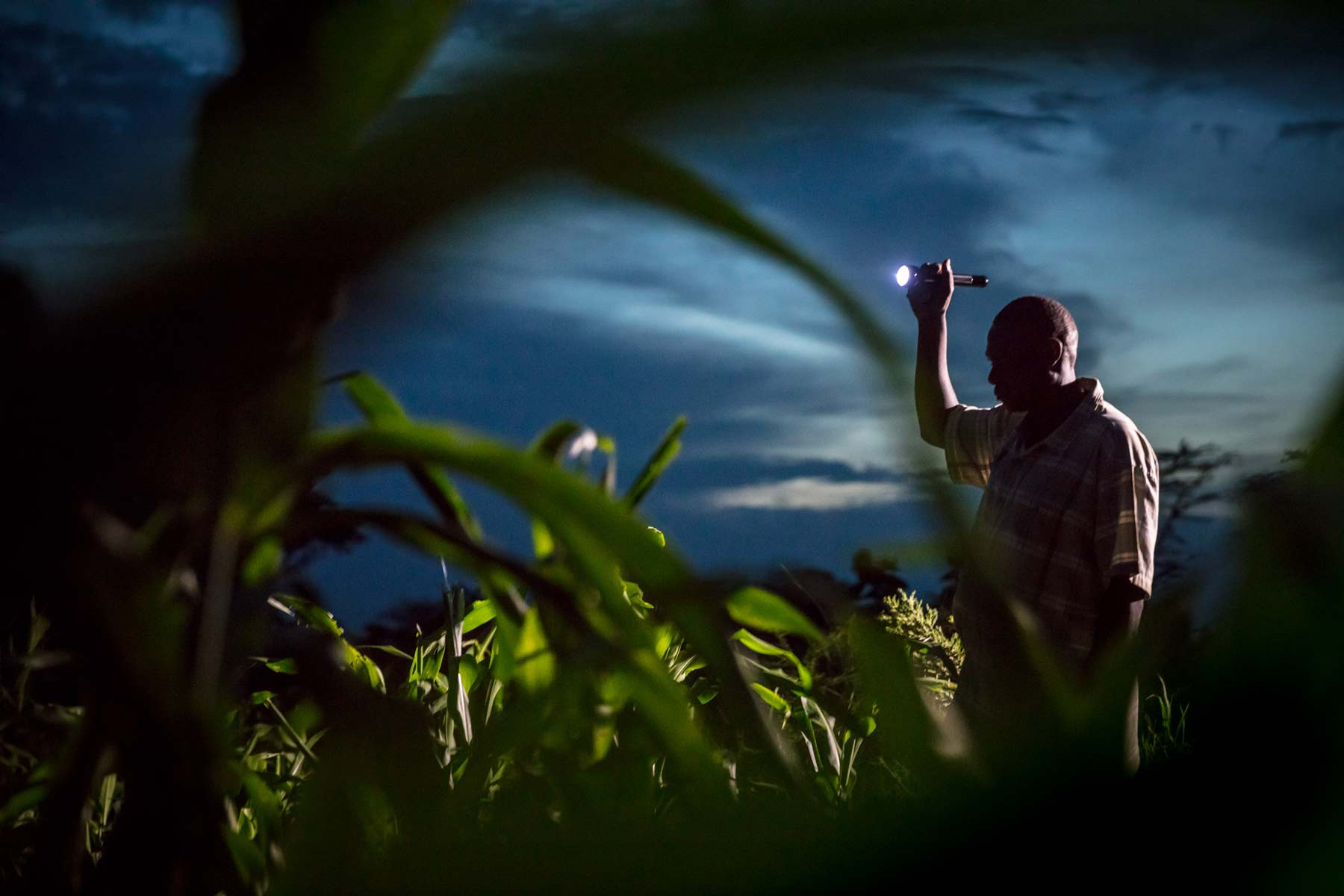 A farmer from a local village in the Grumeti Concession checks his crops at night. Crop raiding by elephants is a common occurrence in the Reserve and can severely impact local farmers who often lose a full year's crops in one crop-raiding incident, which is heartbreaking for the famer and his family who are dependent on their crops for their survival.