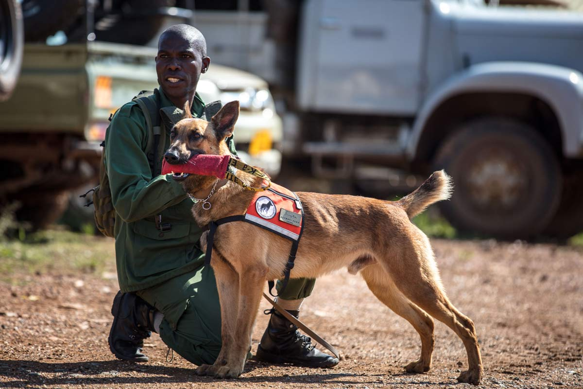 Anti-Poaching Canine Unit (K-9 Unit) working to detect poachers and save wildlife.