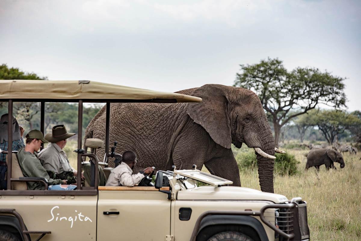 Game drive with wild elephants in Tanzania.