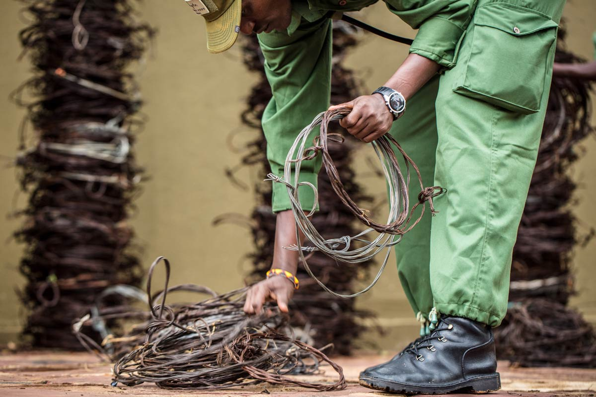 A member of the Grumeti Fund Anti-Poaching Unit collects and stores old wire snares. Wire snares are used by poachers to capture and trap animals. Wire snares are extremely dangerous and can be difficult to find in the wild as they are so easy to conceal. Snares do not discriminate and can cause irreversible damage to animals that were not the original target of the poachers.