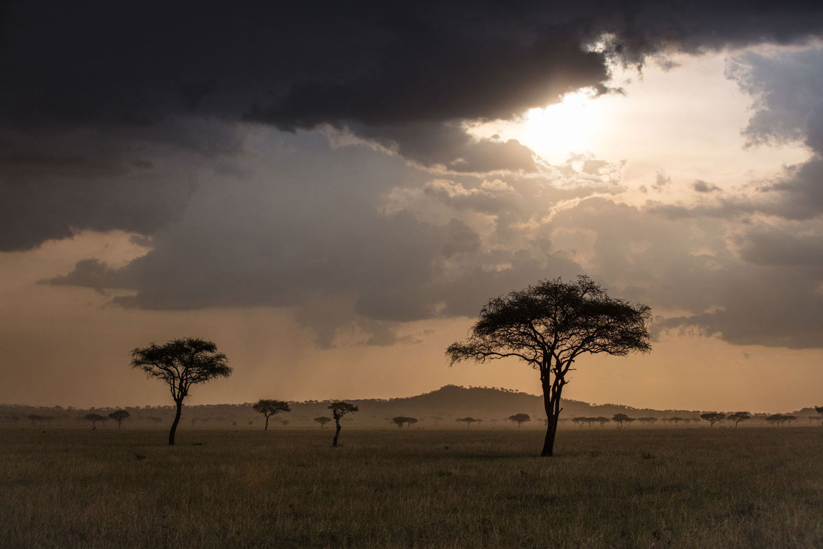 Landscape shot taken in the Grumeti Concession, in the Western Corridor of the Serengeti. The Grumeti Fund is responsible for protecting 350,000 acres of wilderness that form a critical part of the greater Serengeti ecosystem.
