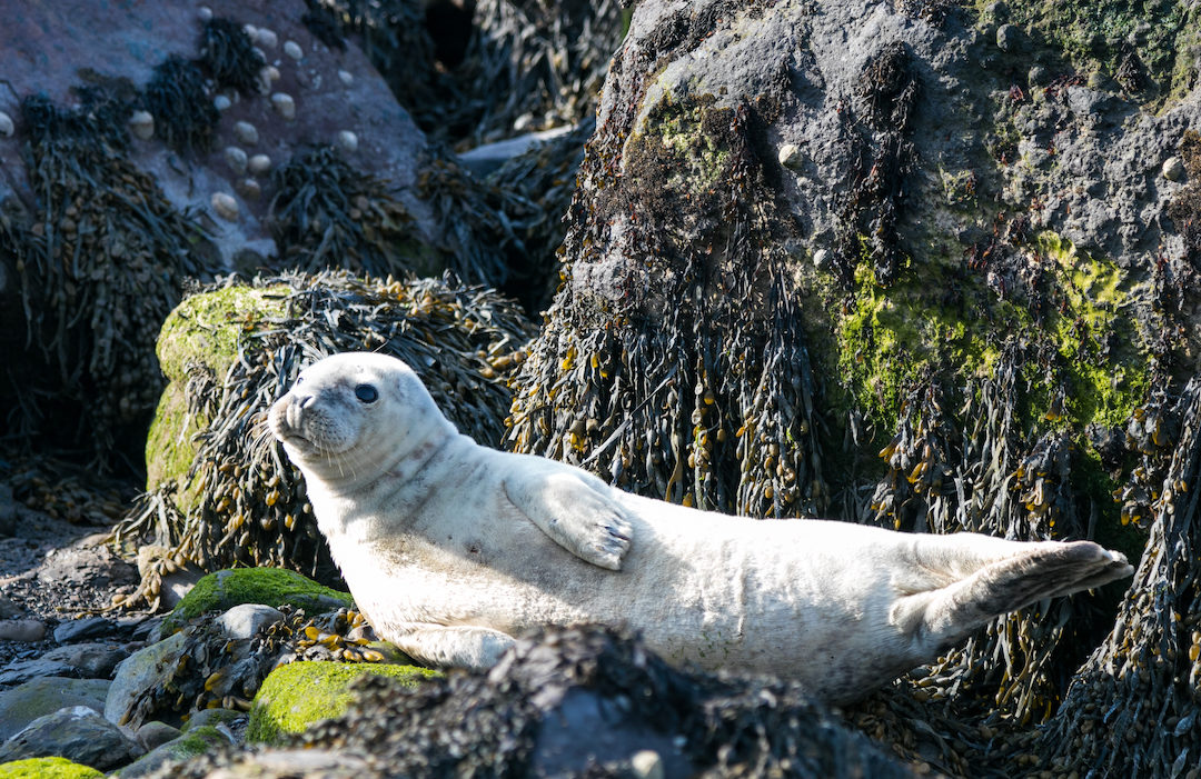 Take a surreal trip to visit the common seals – a photographers dream