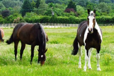 Where Is Vitamin E Found In A Horses Diet Naturally?