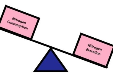 Negative Nitrogen Balance