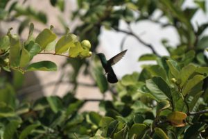 hummingbird poetry