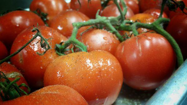 Roasting tomatoes on the vine