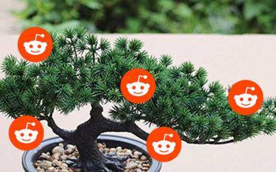 Bland Reddit-attacker och bonsaiträd