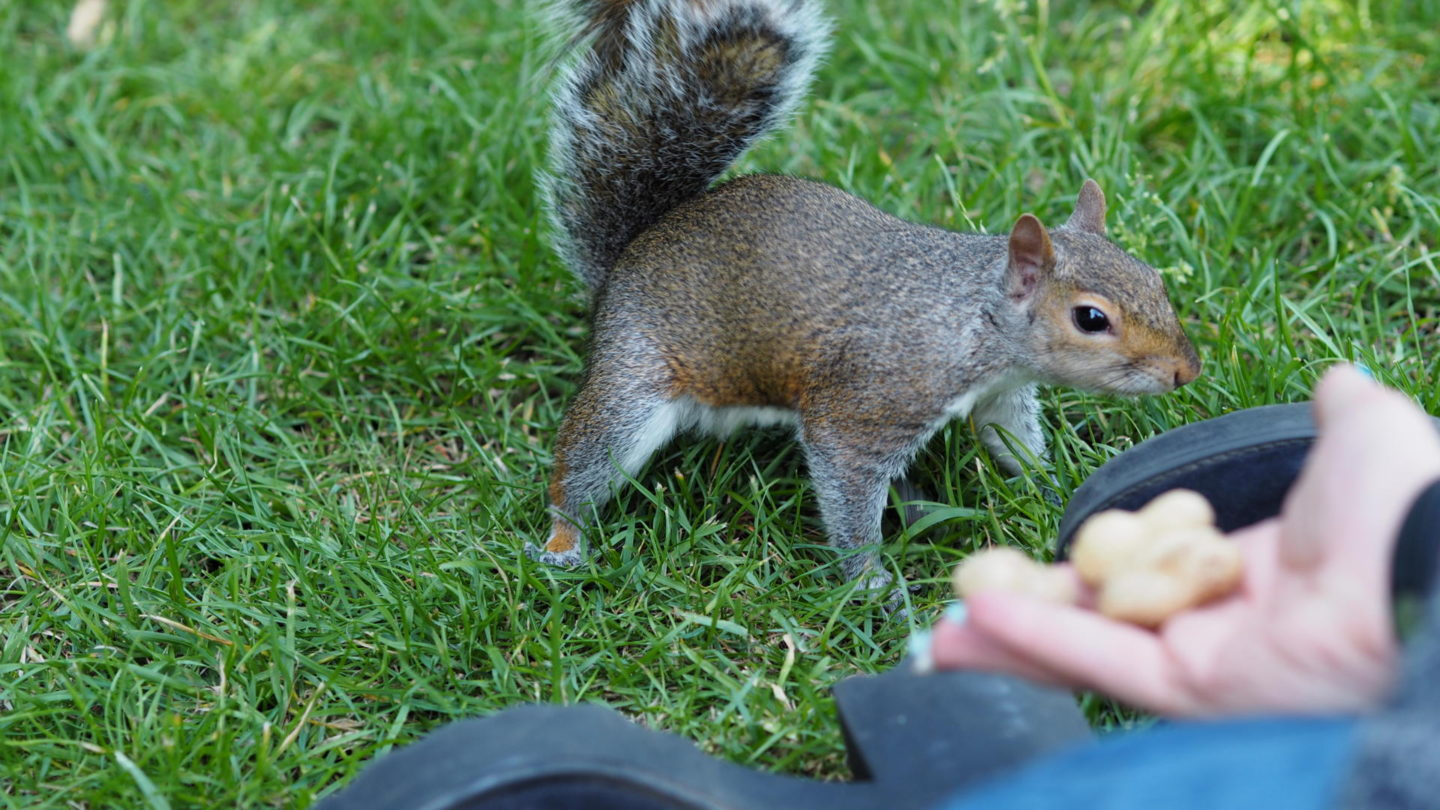 Hometown Tourist #2 - Feeding Squirrels at Hyde Park || Travel