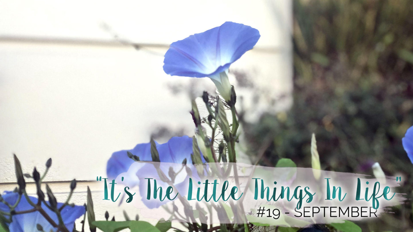 """""""It's The Little Things In Life"""" - 19 - September 