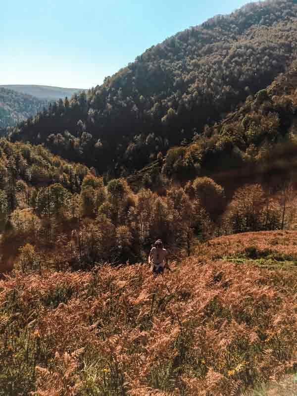 Escapada otoñal: Selva de Irati