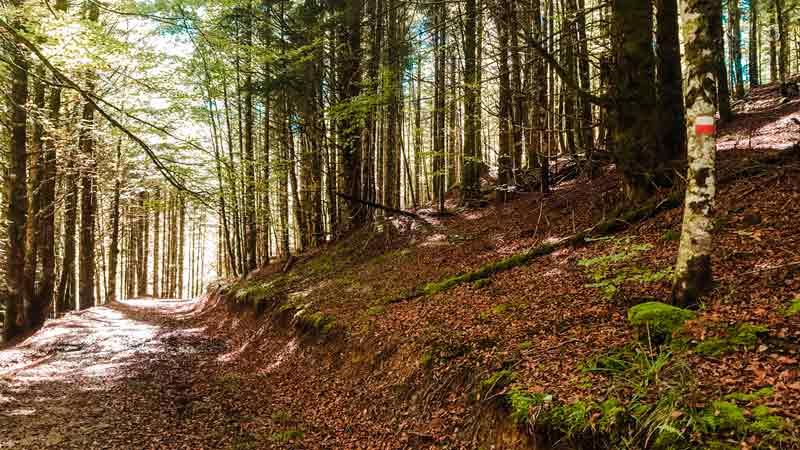escapadas-naturaleza-otoño-navarra