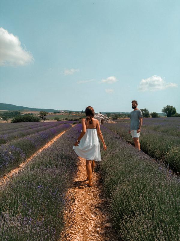 campos_lavanda_francia