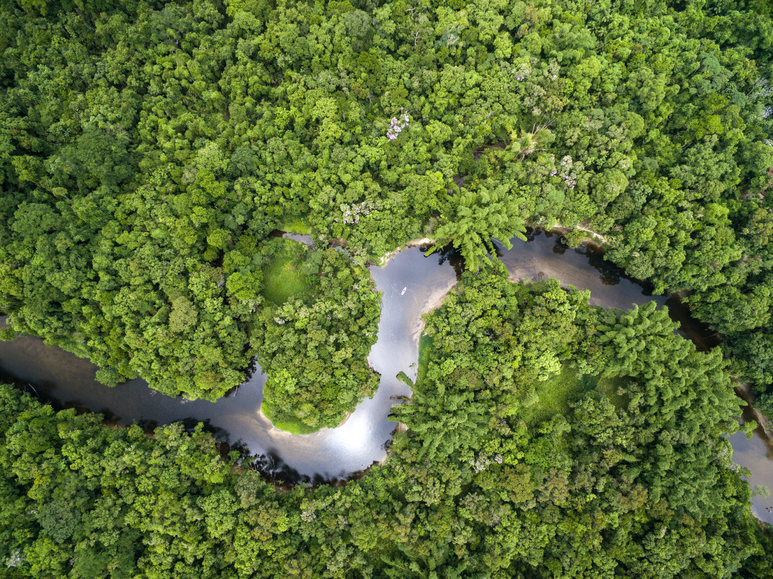 Amazonia Rainforest