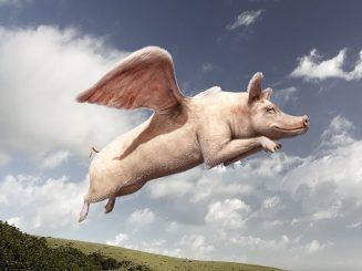 cerdo volador