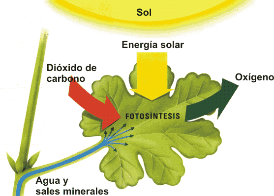 fotosintesis3