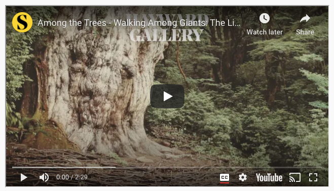 "Screenshot of Youtube video entitled ""Among The Trees"""