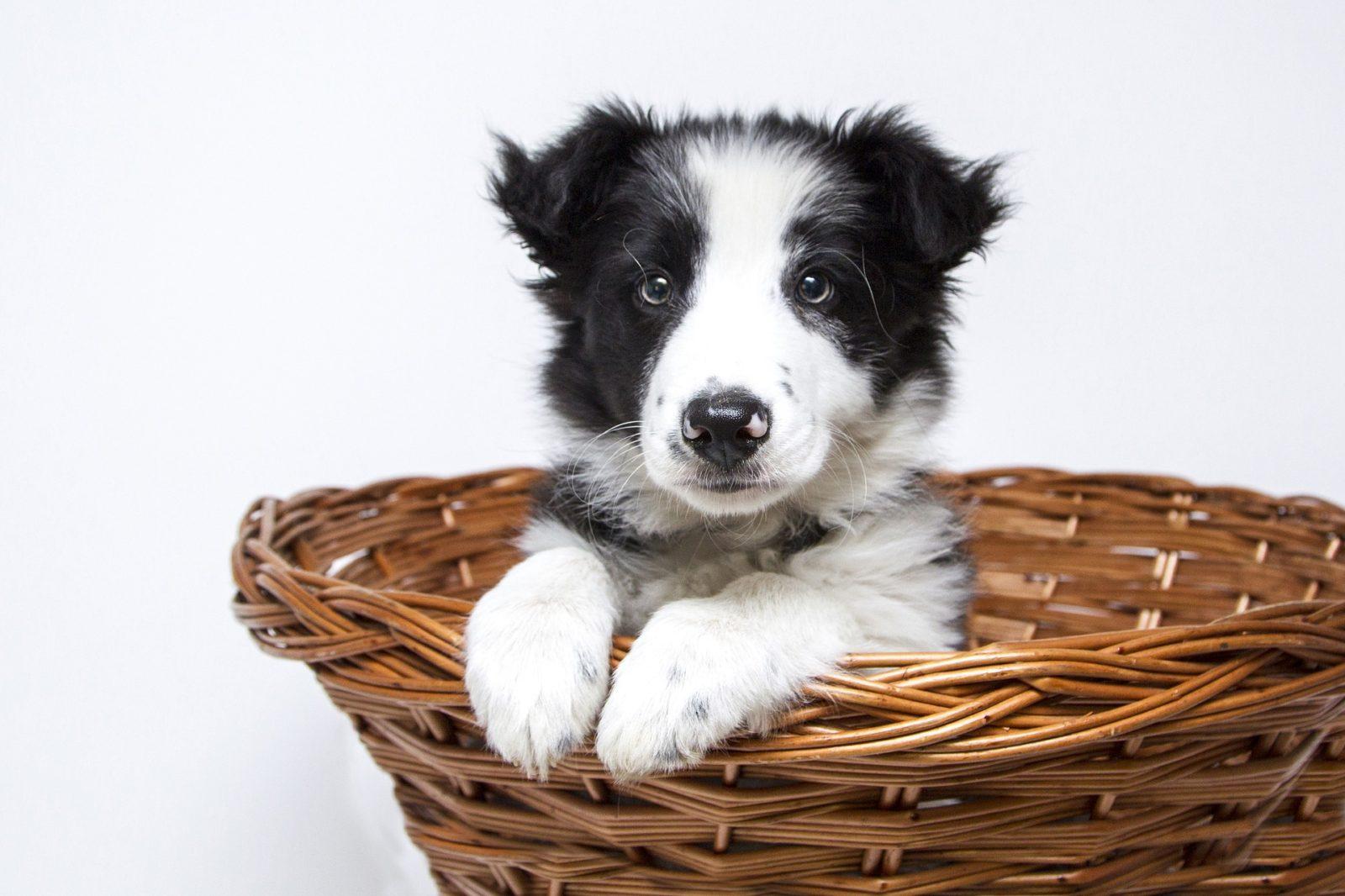 puppy-2298832_1920