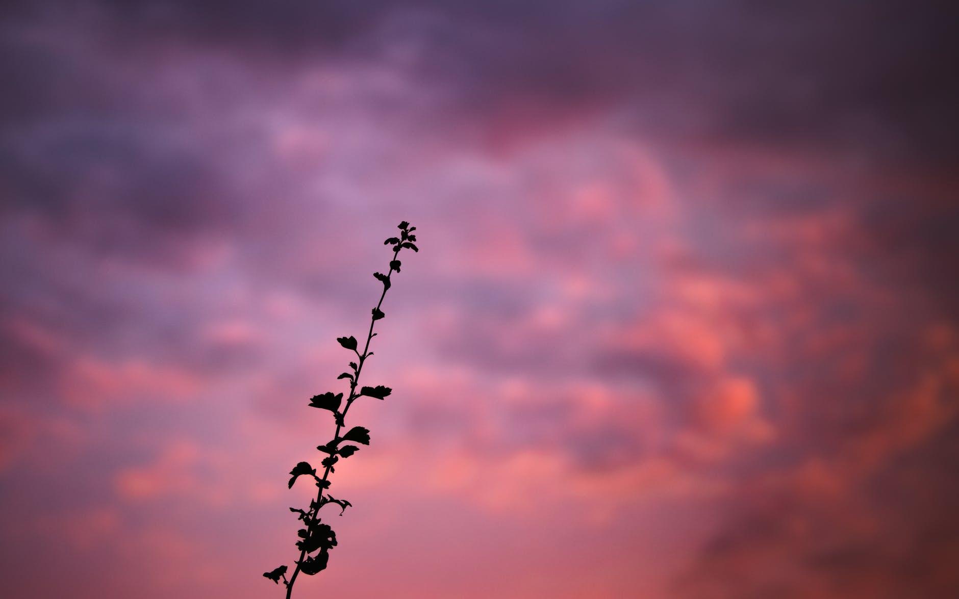 light dawn landscape nature