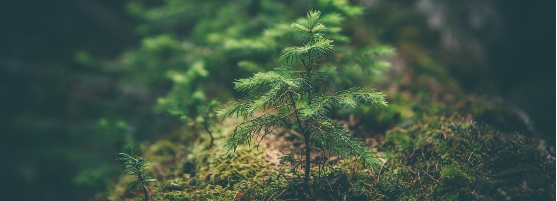 Pressemitteilung zur Waldstrategie 2050