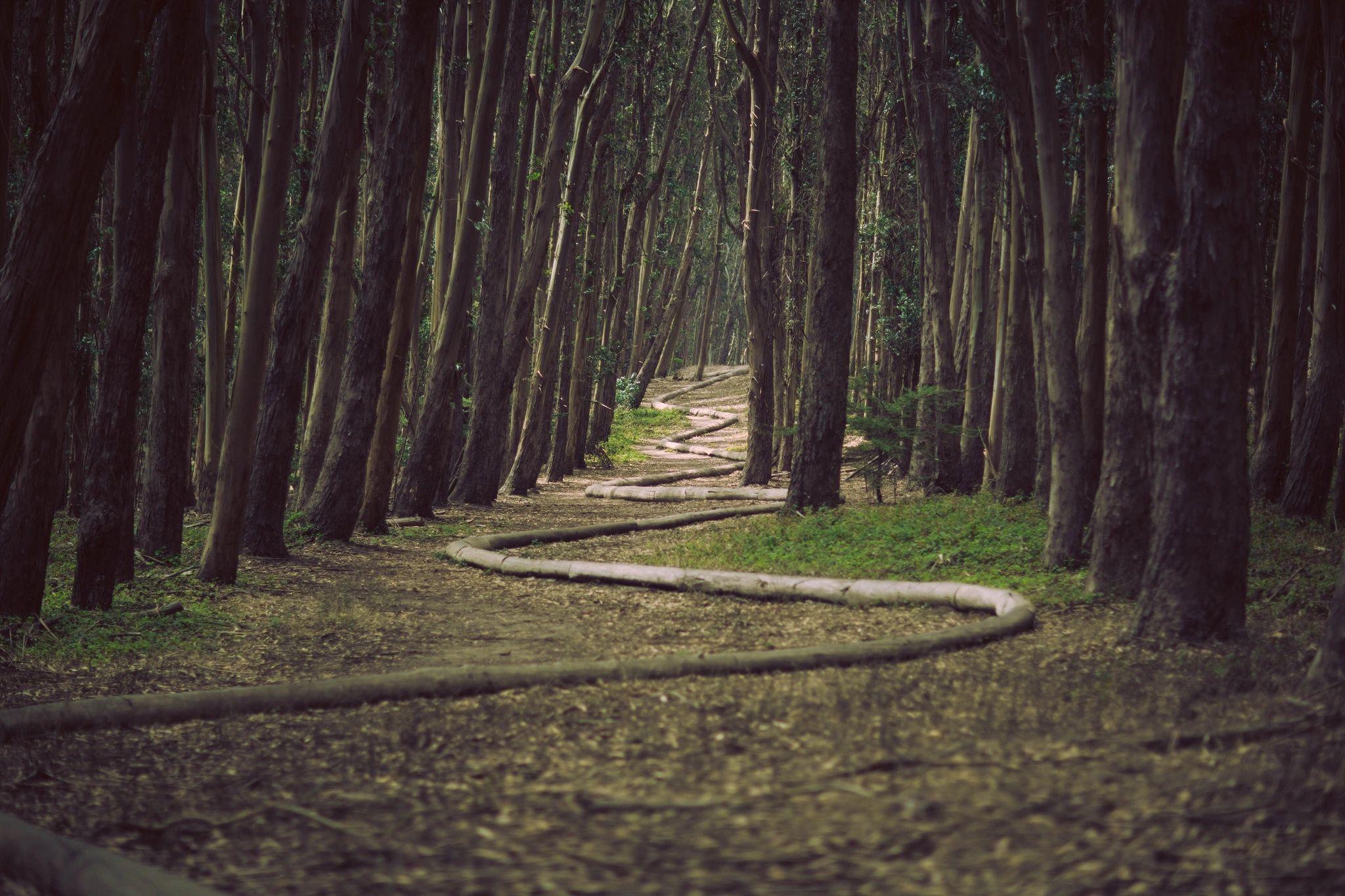 Forstbetriebe entlasten – Schadholz nutzen