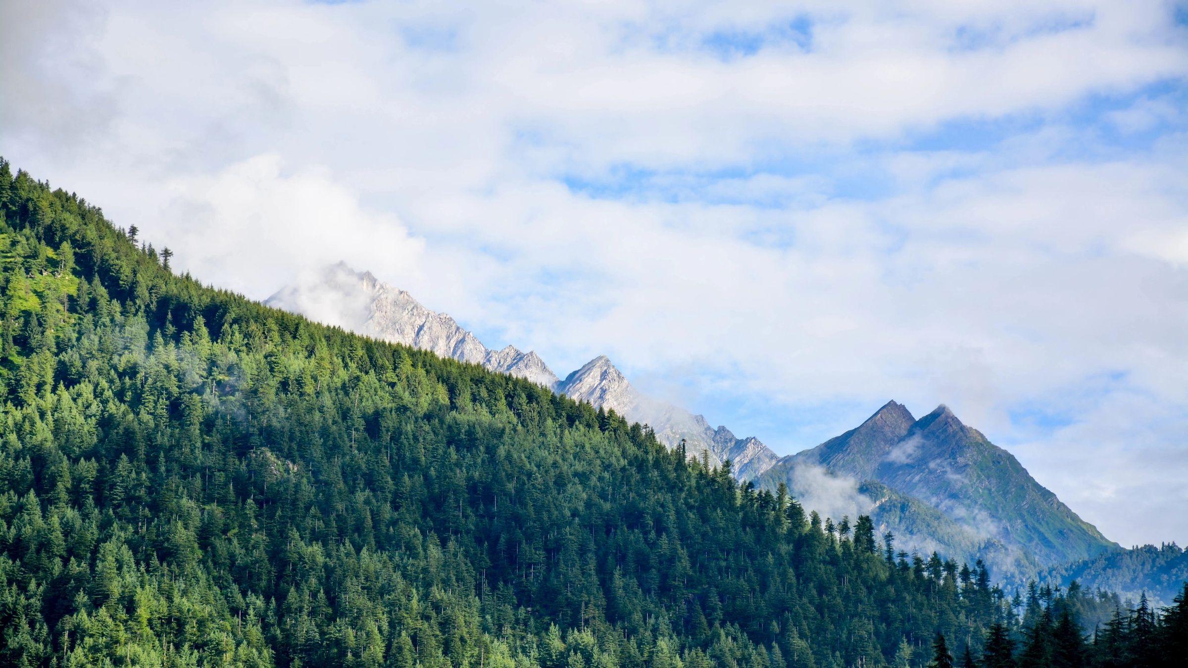 Positionspapier zur Holznutzung in Kohlekraftwerken