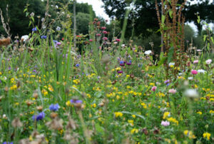 Read more about the article Patchwork plants