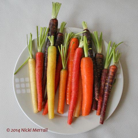Multi-coloured carrots