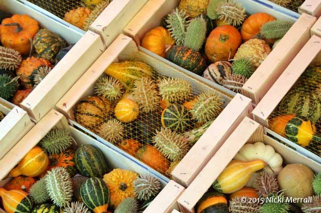 Gourds at L'Isle-sur-la-Sorgue