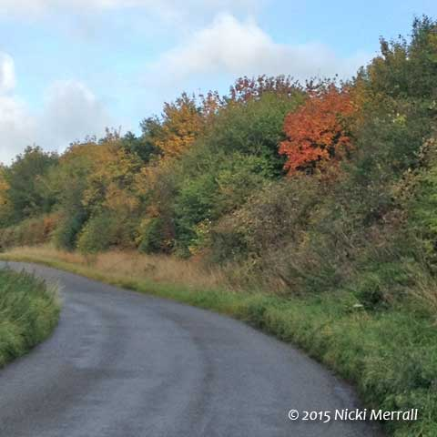 Autumn leaves in a hedgerow