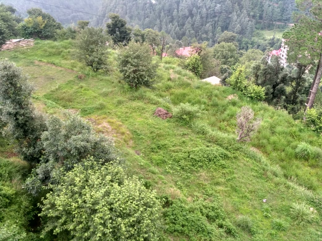24 Bigha Plot For Sale at Near ISBT Shimla — Distance from Bus stand – 3 km —- 1 Km Link from Highway — Sunny and beautiful View — Usable for Apartment —– MC Area —- Price – 55 Lakhs Per Bigha.