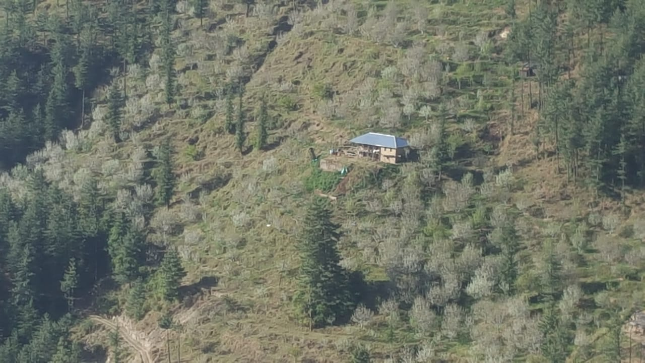30 Bigha Apple Orchard For sale Near fagu shimla —- Drive in —- Elevation – 6500 f —- Total plants – 500+ —- 5 Km link from main road —- Price – 16 lakhs Per Bigha