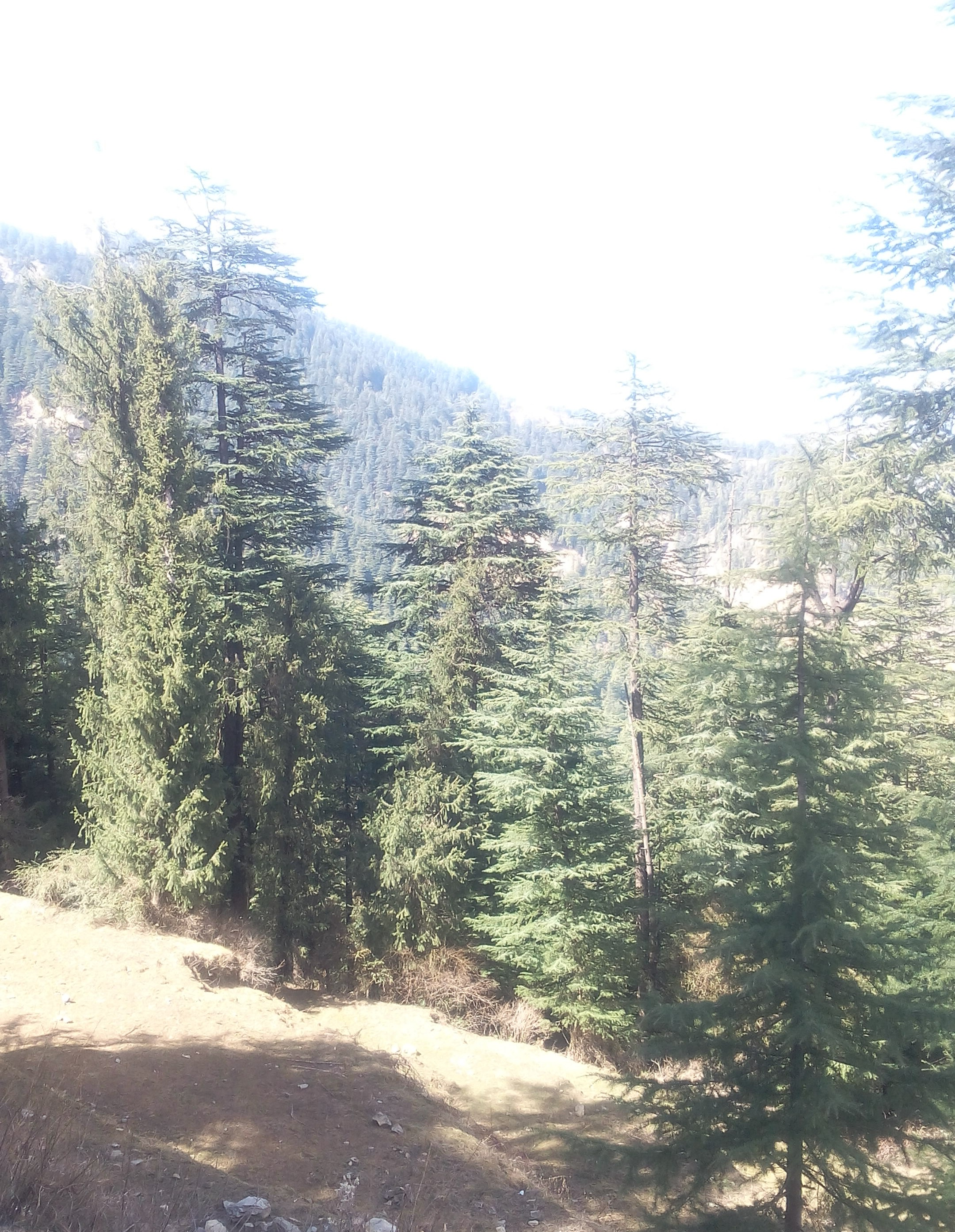 46 Biswa Plot For sale at Near Dak banglow Mashobra Shimla — Drive in — 6 km from Mashobra  — Usable for Cottage and Guest House  —- Price – 1.84 Cr.