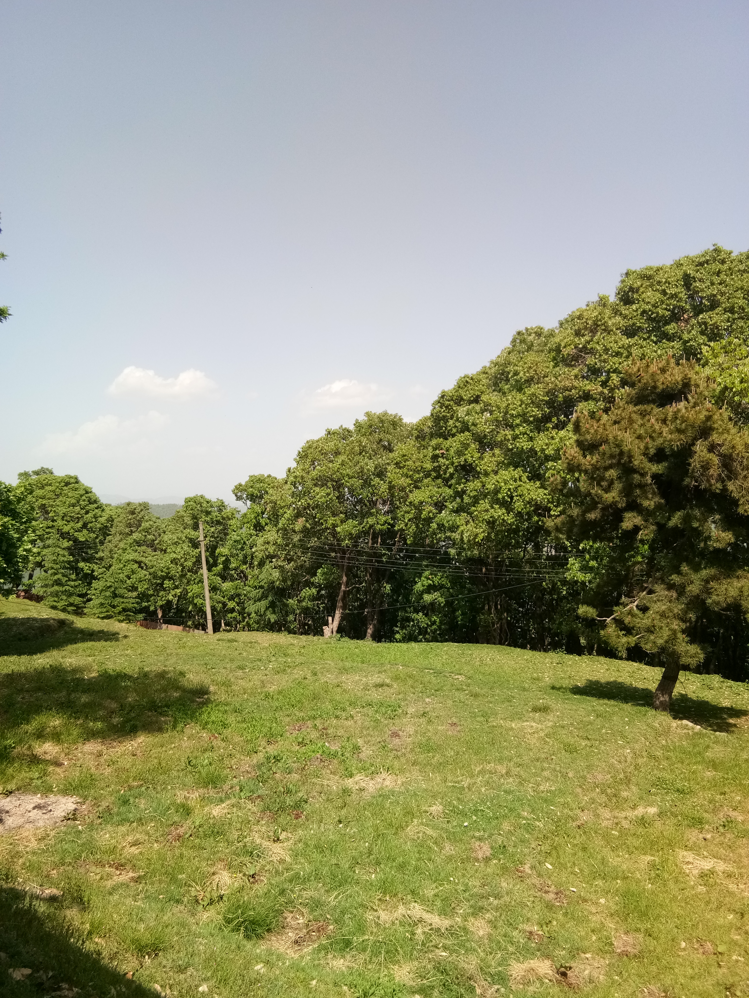 52 Bigha Land for sale at chail Himachal Pradesh — Drive in —- Hill top — Usable for  Hotel and Resort —- Total forest — Beautiful View — Price – 30 Cr