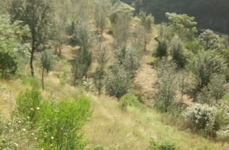 25 Bigha Agriculture Land With Independent house For Sale at Near Sainj Teh Theog Distt Shimla HP —- Drive in —- Water tank with water Lift Facilities —- Price – 85 Lakhs