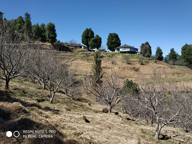 10 Bigha Land For Sale at Near Mahasu House Mashobra Road Shimla —- Usable For Huts and Villas  —- Price – 5 Cr —– Contact :- +91 9218227122 – 23