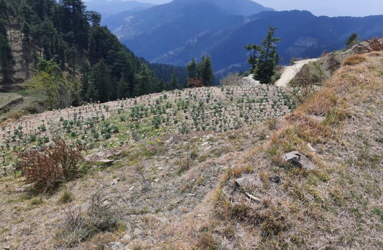 5 Bigha Land for Sale in Very Prime Location at Gallu near Fun Campus New Kufri Shimla HP — Drive in —- Usable for Hotel,Resorts and Villas —-  Sunny and Very Beautiful View —- Price – 6 Cr ( Negotiable) — Contact Us – 9218227122 – 23