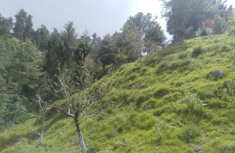 32 Biswa Plot for Sale  —- Location – Tourist Place Kufri Shimla — Drive in —– 50 Meters Distance from NH —– Usable for Hotel & Villas  —- Price – 12 Lakhs Per Biswa ( Negotiable) —- Contact Us:- 9218227122 – 23