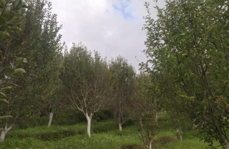 9 Bigha Apple Orchard for sale near Deha – Kuthar Distt. Shimla HP —– Total Plants – 500 —- Elevation – 6500 Ft —- Price – 85 Lakhs —- Contact Us:- 9218227122 – 23