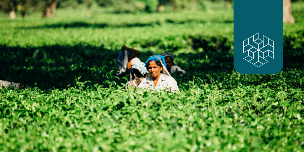 Indian Agriculture: Policies for Sustainable Transformation