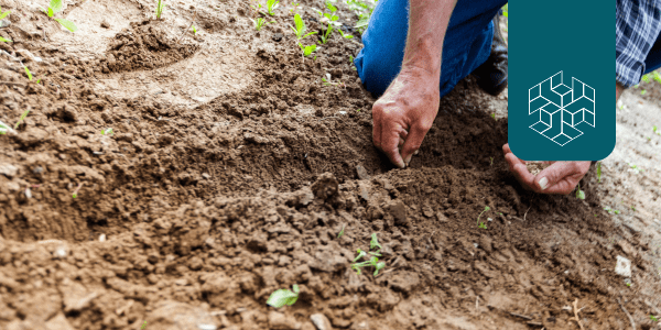 Indian Agriculture: The Transition to Sustainability