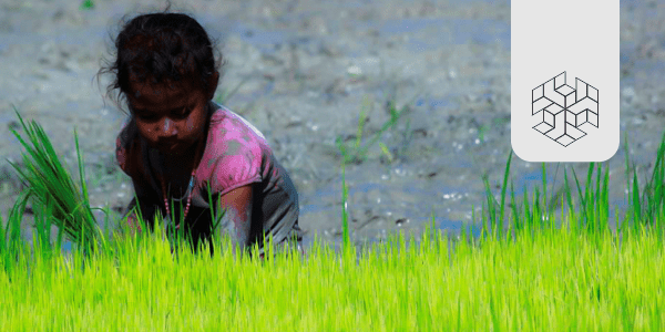 Child Labour in Agriculture and COVID-19: The Tale of Two Pandemics