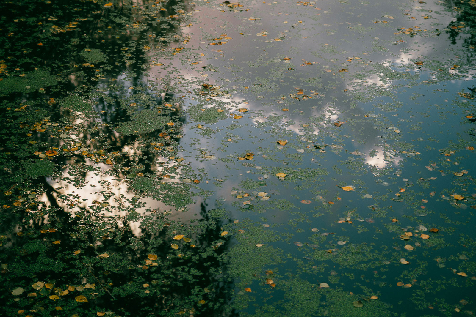 Holme Fen leaves on water in autumn