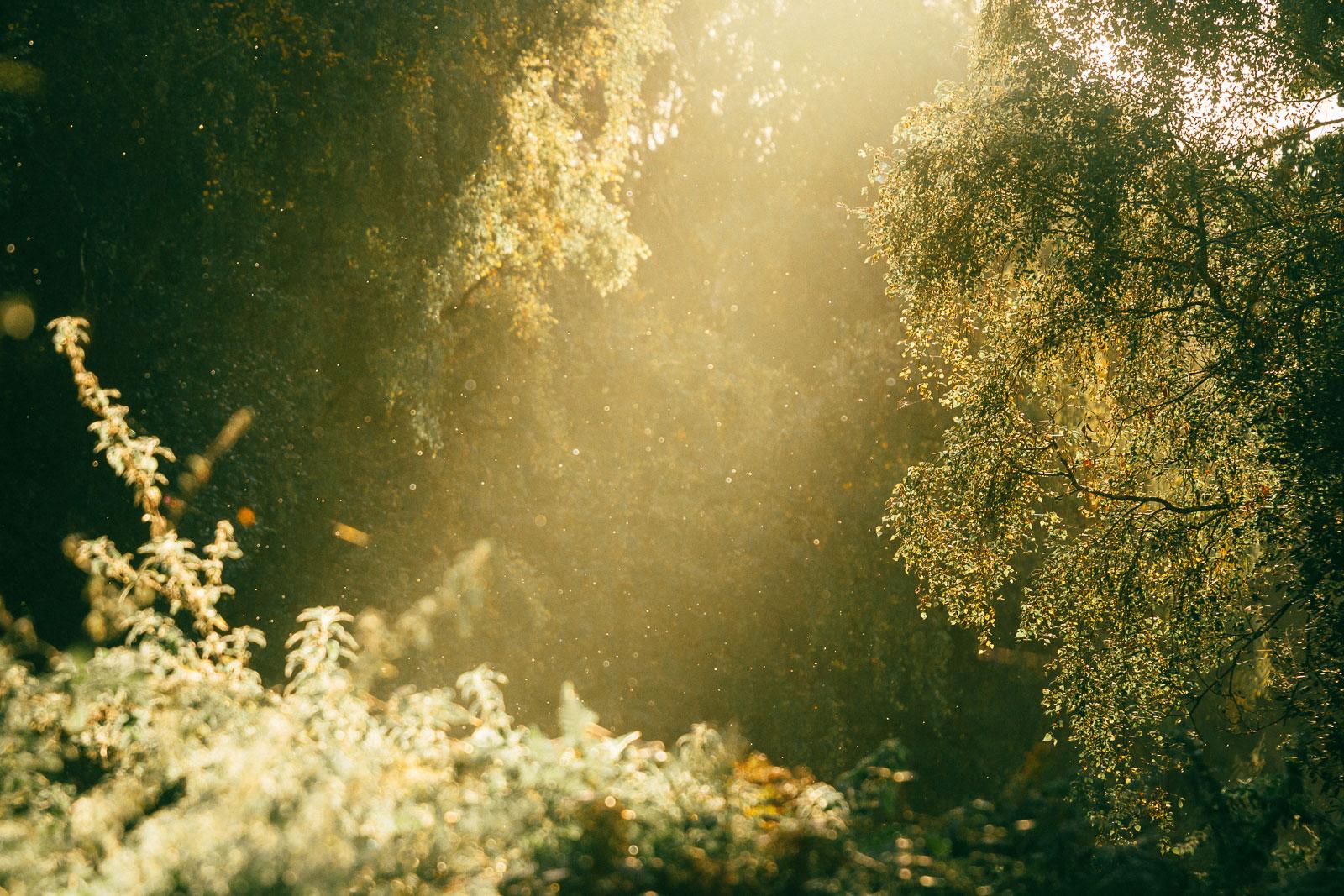 Holme Fen shaft of light on ferns, forest, trees