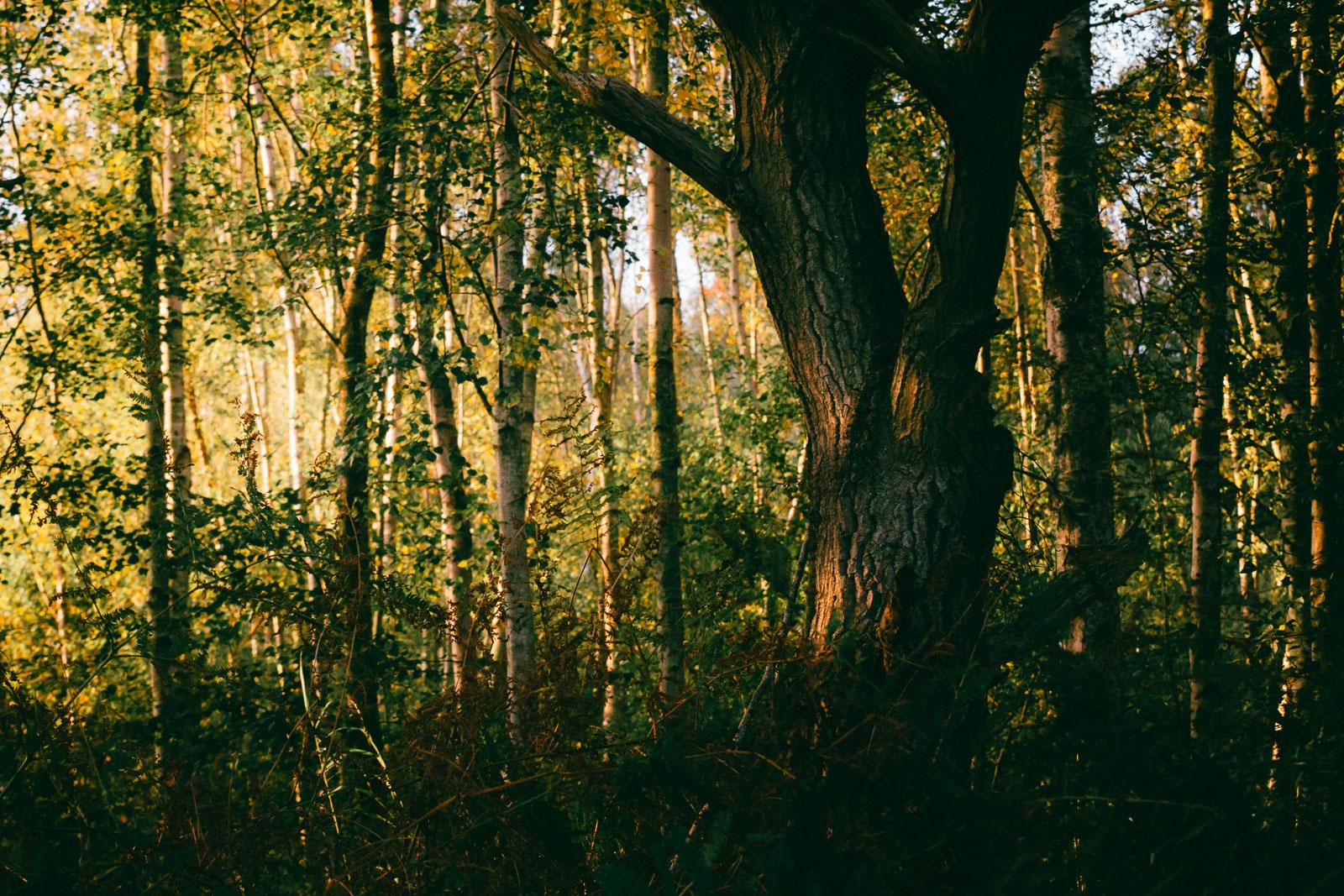 Tree Trunk at Holme Fen
