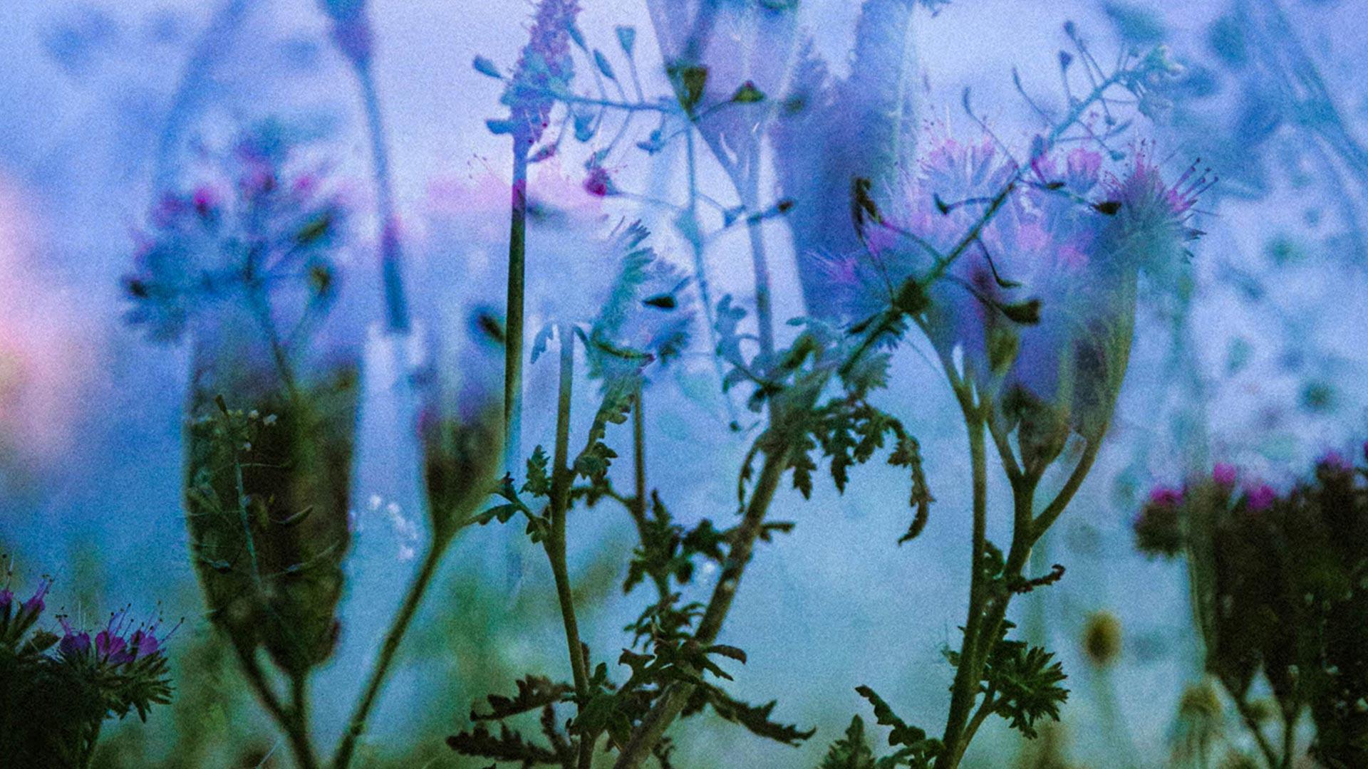 Cambridgeshire Wildflowers