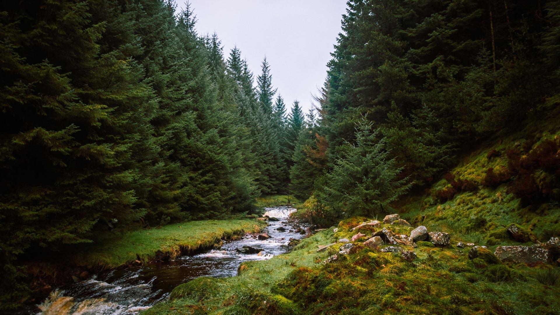 Snake Woodland Nature Walk